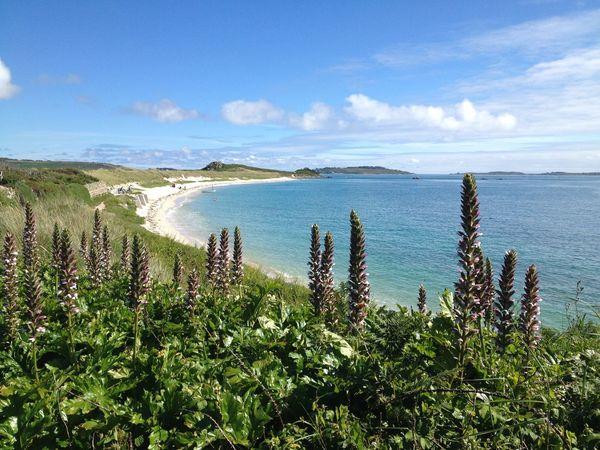 Bay Beach Blue Cove Isles Of Scilly Plant Sand Sea Tranquil Scene Tresco