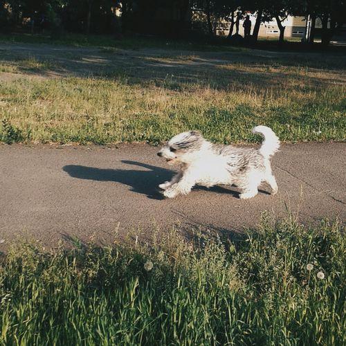 собака любовь всей жизни ♡ бегун