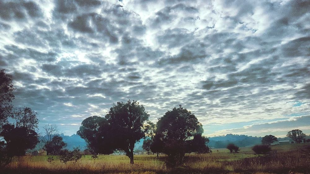 Road trip, Australian farmland. Tree Cloud - Sky Beauty In Nature Tranquility Scenics Outdoors Landscape Day Canberra NSW Australia Australia Clouds EyeEmNewHere The Great Outdoors - 2018 EyeEm Awards