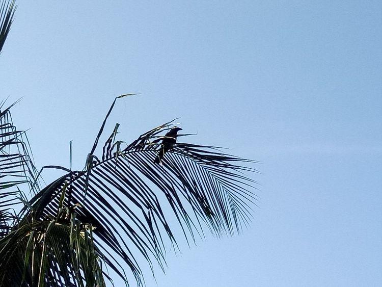 Taking Photos Nature Bird Alandur Chennai