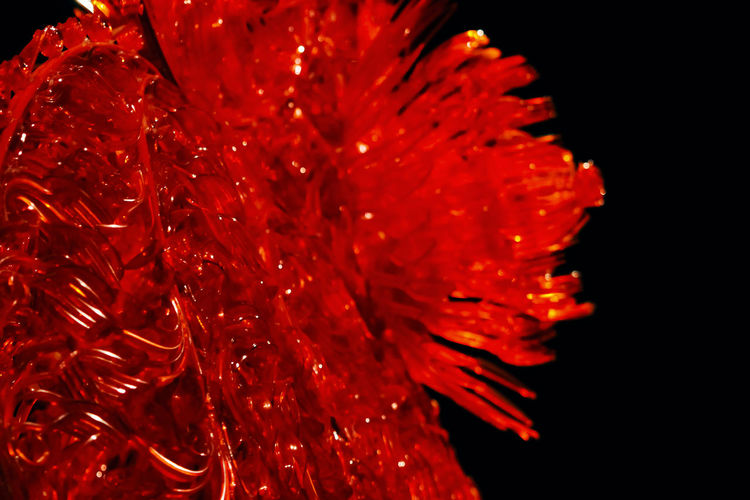 Red Close-up No People Petal Beauty In Nature Flower Freshness Fragility Flowering Plant Nature Vulnerability  Selective Focus Flower Head Indoors  Inflorescence Plant Studio Shot Pollen Growth Vibrant Color Black Background Spiky