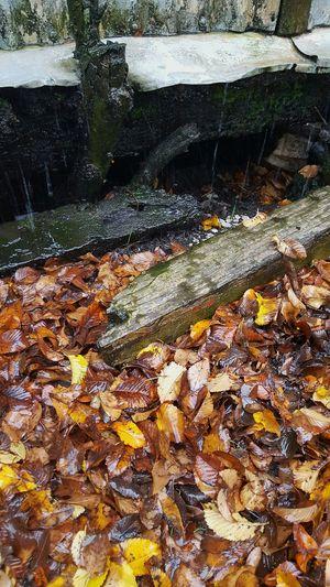 Autumn leaves on ground Autumn Colors Rain On Autumn Leaves Rain On Old Wood