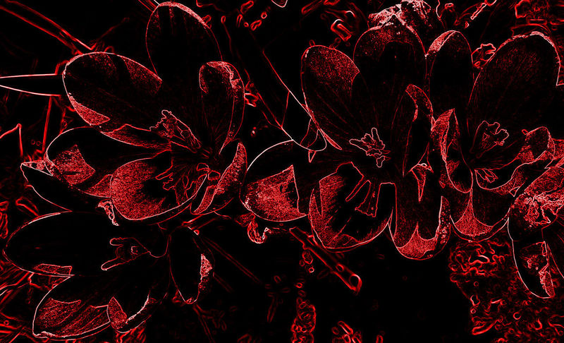Crocuses outlined in red on black Beautiful Backgrounds Beauty In Nature Black Background Close-up Floral Flower Flowering Plant Full Frame Growth Illustration Leaves Nature No People Outline Pattern Plant Red Still Life