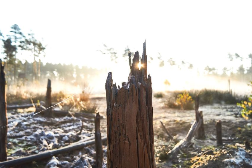 Heat - Temperature Wooden Post Nature Landscape No People Outdoors Foggy Morning Fog Swamp Beauty In Nature Travel Destinations Winter Been There. Sunlight Sunrise EyeEm Ready   Shades Of Winter