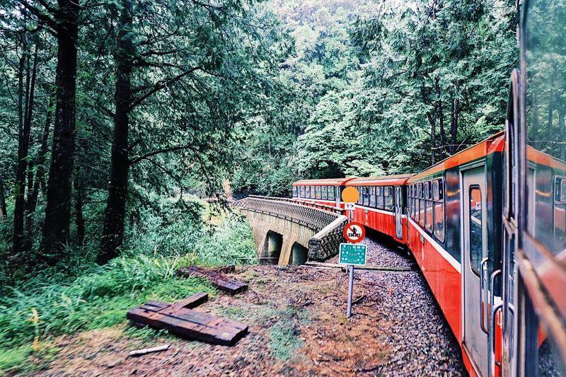 Rail Train Redtrain Nature Alishan Alishanrailway Taiwan