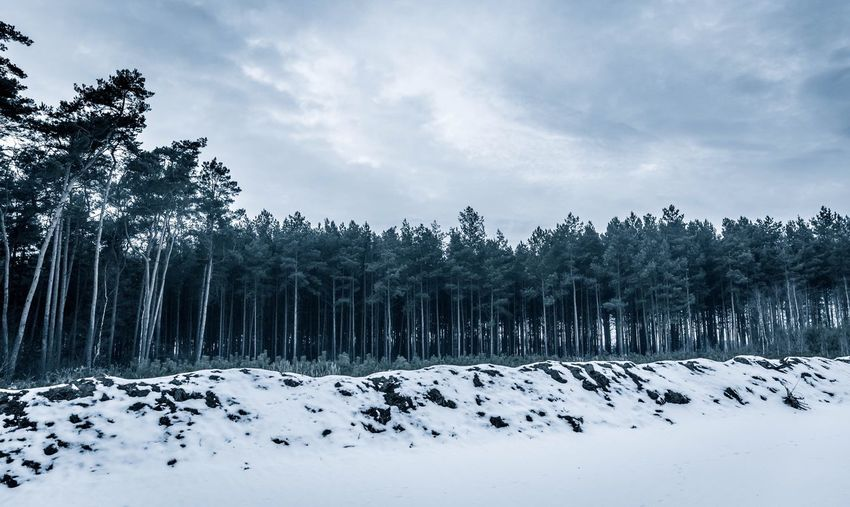 The forest Tree Snow Cold Temperature Nature Sky Winter Tranquility Beauty In Nature Scenics Tranquil Scene Weather No People Day Outdoors Landscape Cloud - Sky Growth Forest Forest Photography Woods Snow ❄ Cold Weather Trees Bluesteel Blue