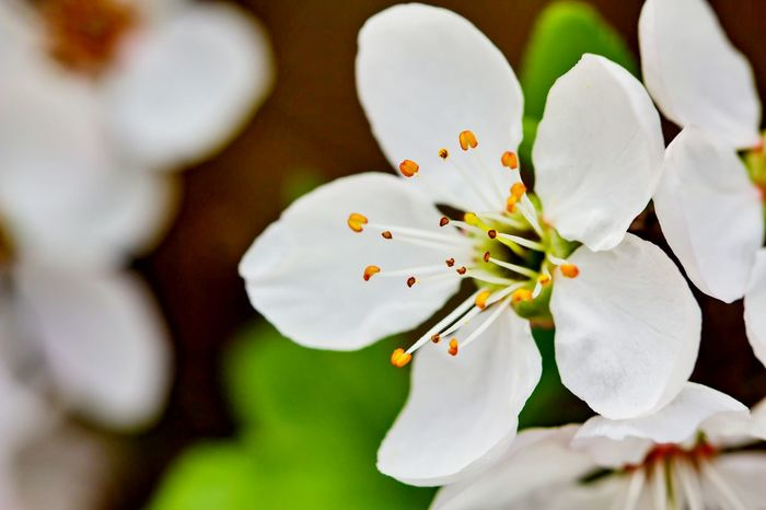 Close-up This Week On Eyeem Things ı Like Springtime Blossoms Blooming Good Vibes Exeptional Photographs Blossoming Tree Blossom Tree White Flower Blossem Blossem Blossem.. Spring Flowers Macro Macro Beauty Macro Photography Macro_flower EyeEm Macro Showcase April
