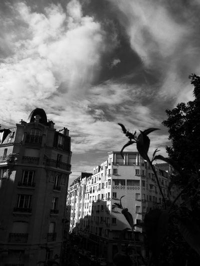 City Politics And Government Statue Clock Tower Sculpture Cityscape Tree Urban Skyline Clock Face Silhouette