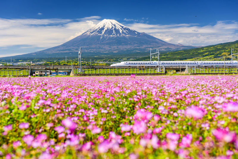 JR Shinkansen or Bullet train run pass Mount Fuji and pink Shibazakura at spring. N700 model, Super high speed railway, transit from Tokyo to Osaka. Fujisan Landscape_Collection Shinkansen Transportation Beauty In Nature Bullet Train Cloud - Sky Day Flower Flower Head Freshness Fuji Landscape Mountain Mountain Range Nature No People Outdoors Pink Color Scenics Shibazakura Sky Spring