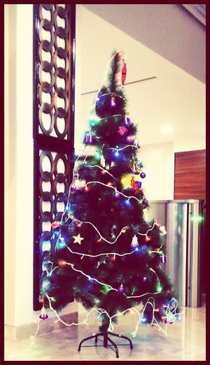 Christmas tree in my office..