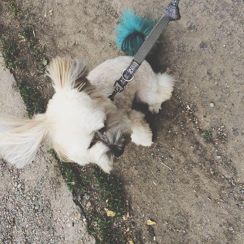 Puppy Blue Tail Fun Earsintheair