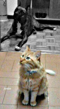 Dog: Pirox. Cat: Coco. Viendo como mi madre prepara la comida. Se quedan como estatuas jeje. I Love My Cat I Love My Dog Color Splash en Fuenlabrada