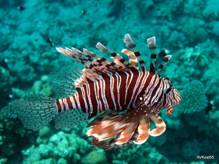 Sea Life Underwater UnderSea Sea Coral Animals In The Wild Reef Animal Wildlife One Animal Animal Animal Themes No People Scuba Diving Nature Water Close-up Biology Outdoors Day