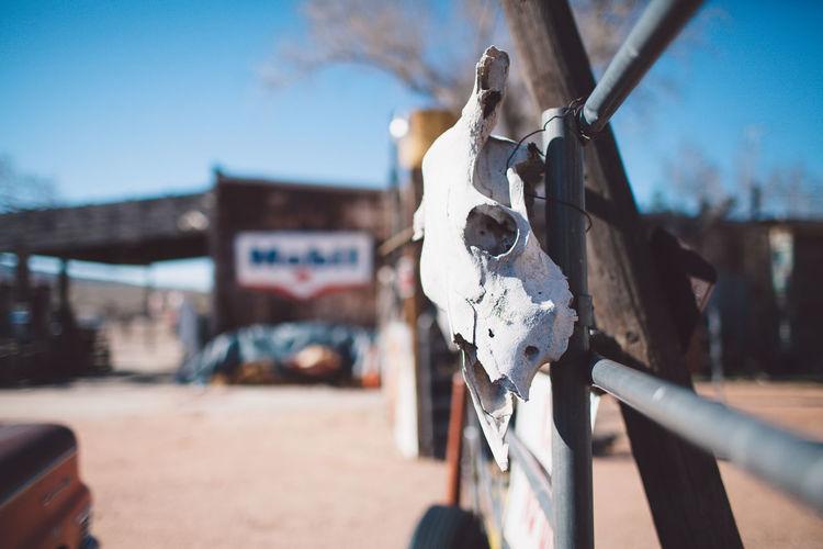Animal Skull Hanging On Railing At Arid Landscape During Sunny Day
