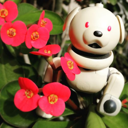 AIBO Aibobox ERS-300 Sony Sonyaibo Flower Head Plant Freshness Nature Flower Beauty In Nature Outdoors Day Glass Robot Dog Green Green Color Latte Macoron Robot Close-up Red Celebration No People
