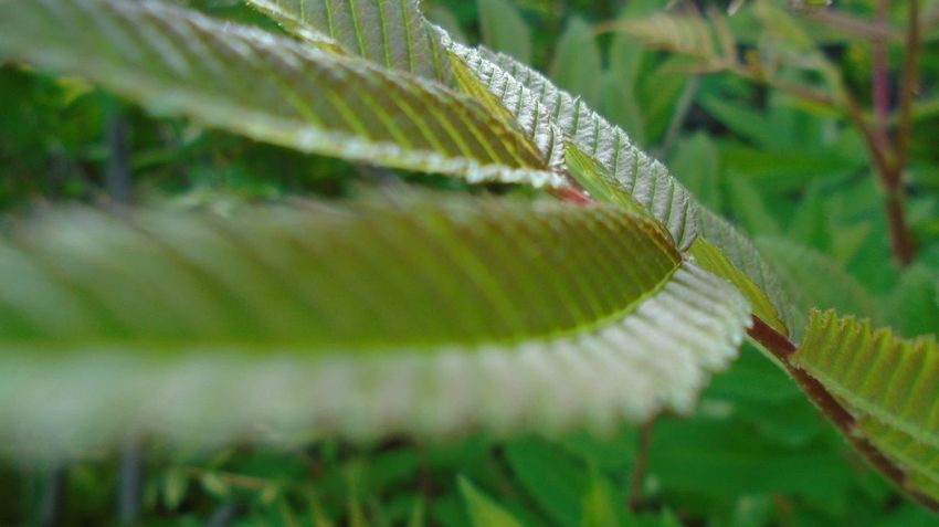 🌿🌿🌿 Nature Green Green Plant Close Up Close-up Leaf Leaves Exploring
