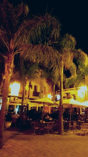 Noche De Octubre Palms Night Lights Nightphotography