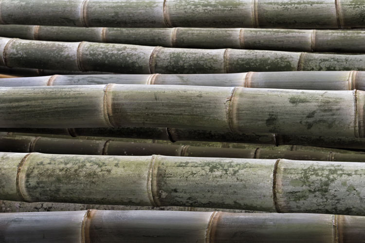 Bamboo Stalks Full Frame Close-up Nature Bamboo - Plant Abstract Bamboo Nature Green Color Green Backgrounds Background Textured  Pattern Textures Backdrop Plant Cylindrical Natural Ecology Environment Strength Multi Use Harmony Zen Stalk