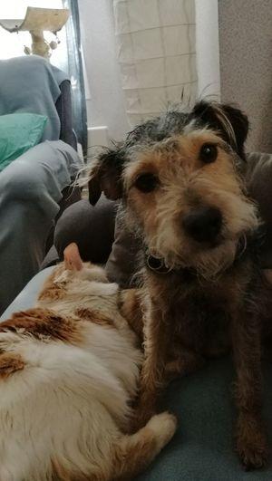 Pets Dog Myfriend♥ Mydog♡ Cat♡ Love ♥ Cute♡ Cuddles Mycat♥