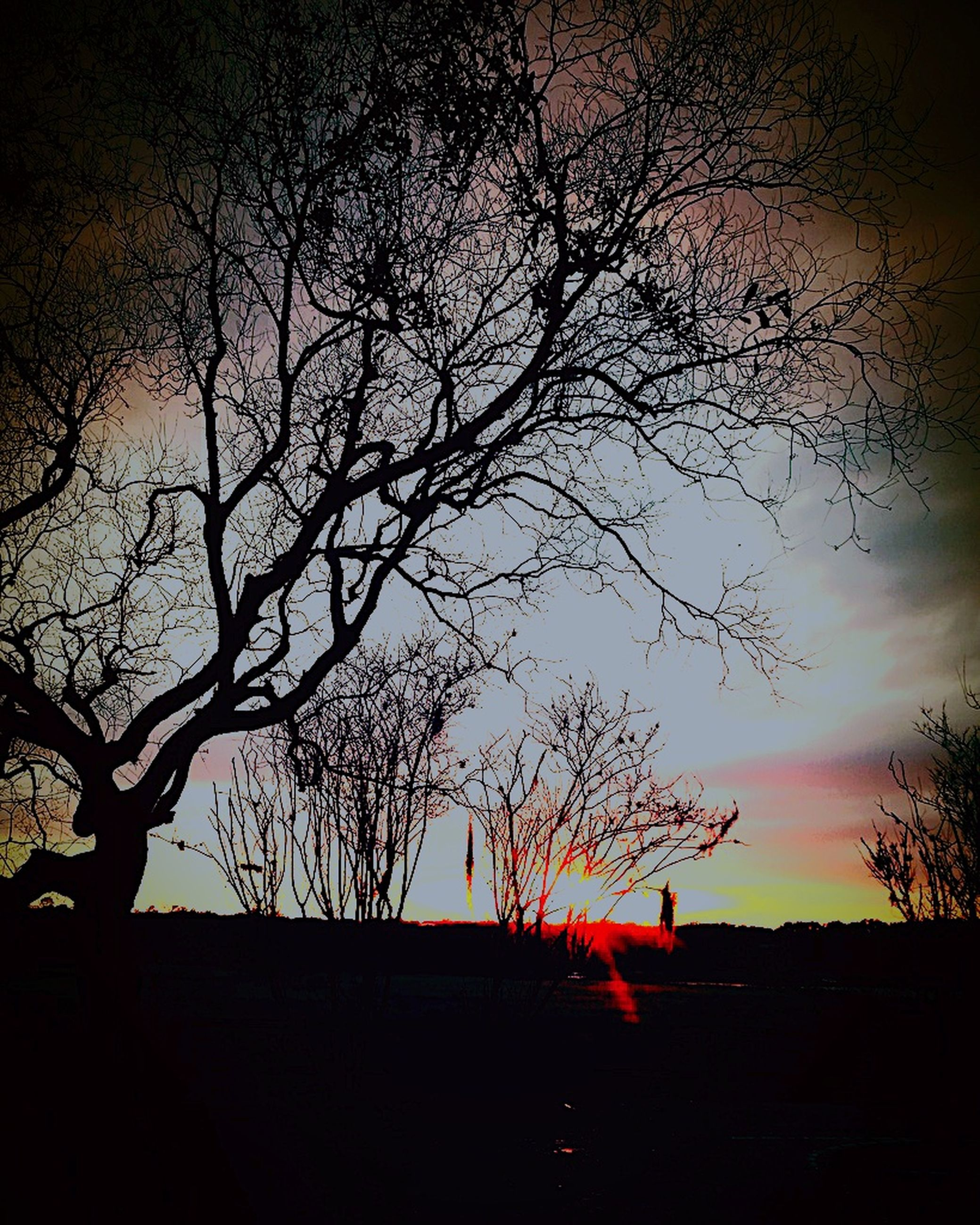 tree, silhouette, sky, plant, sunset, beauty in nature, branch, tranquility, scenics - nature, bare tree, nature, tranquil scene, no people, orange color, land, outdoors, field, cloud - sky, idyllic, tree trunk
