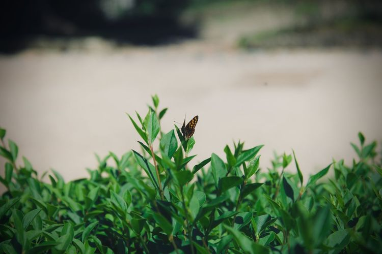 Animal Themes One Animal Animal Animal Wildlife Animals In The Wild Plant Growth Green Color Nature Vertebrate Invertebrate Selective Focus No People Day Bird Insect Plant Part Leaf Beauty In Nature Outdoors