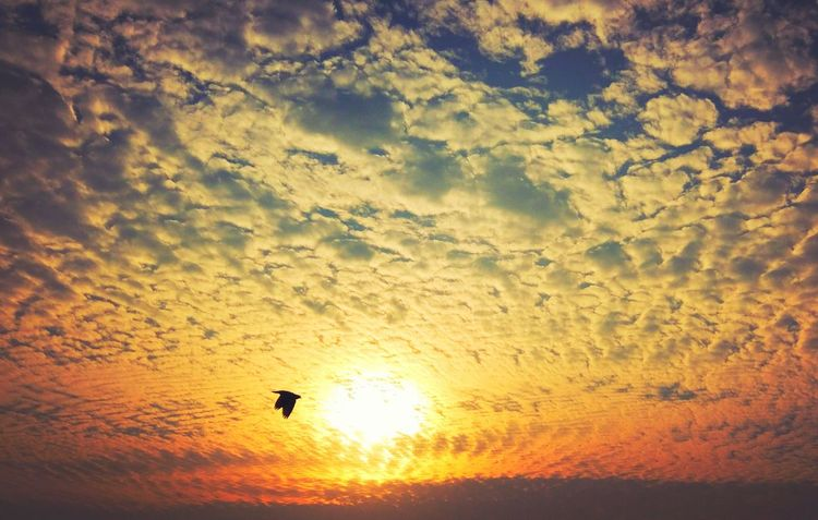 Sunrise And Clouds Free Bird Clear Sky Skylovers Beauty In Nature Calm Morning
