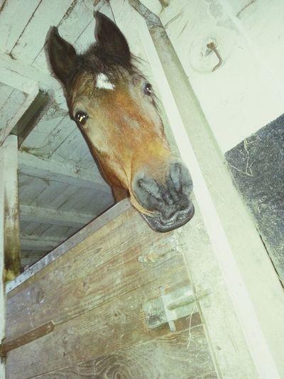 Horse Baby Größter Schatz :*