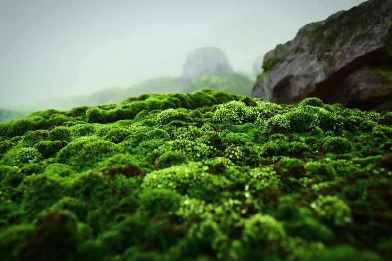Small life. Plant Green Color Beauty In Nature Tranquility Growth Nature Day Scenics - Nature Outdoors Non-urban Scene
