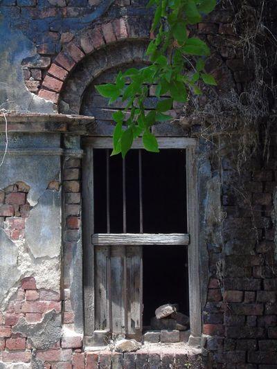 Old Ruin Window