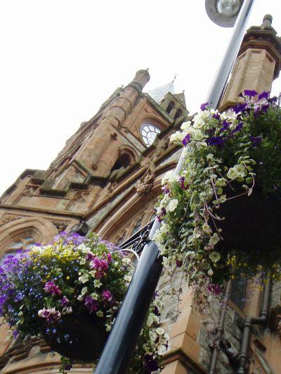 Ireland🍀 Derry Londonderry Flowers The Guildhall EyeEm Best Shots Eyeem Flowers Angles