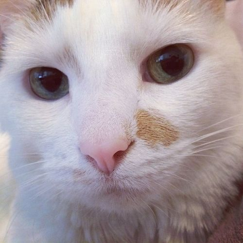 Catsofinstagram Trb_creature_feature Shutterbug_collective Jj_justcats Animalsmood Ptk_pets Trb_cf_closeups Trb_catsmeow Jj_louisiana_035 Sc_white Hubbabubbanose Urbx_cats Rsa_white