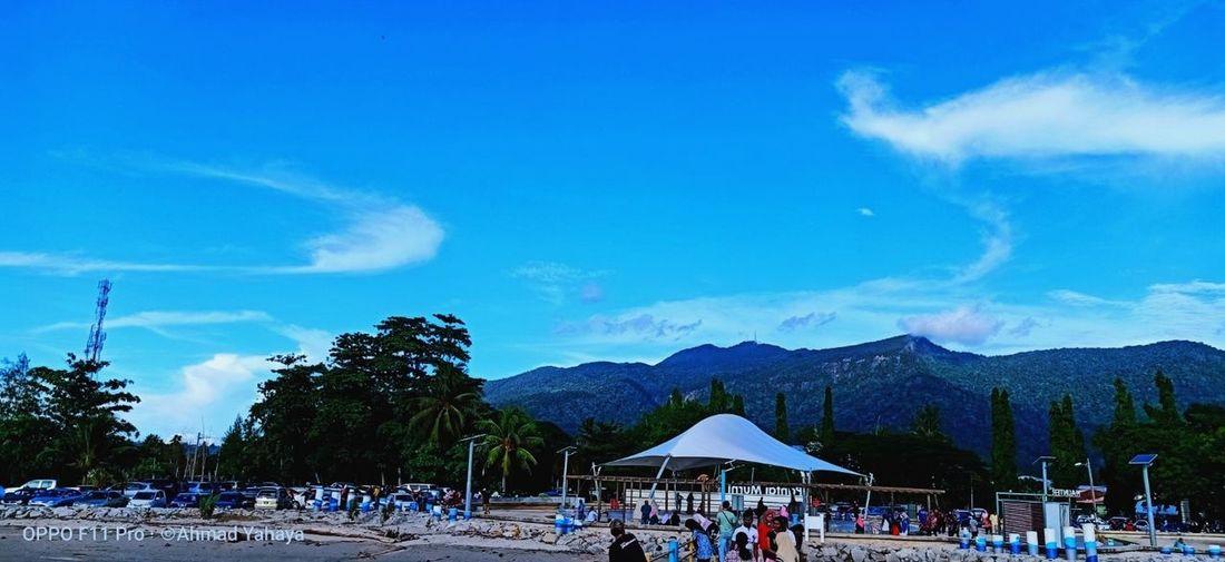 Tree Blue Sand