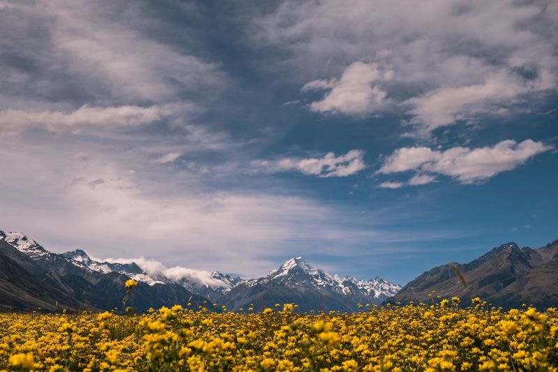Yellow flowers on land against snowcapped mountains