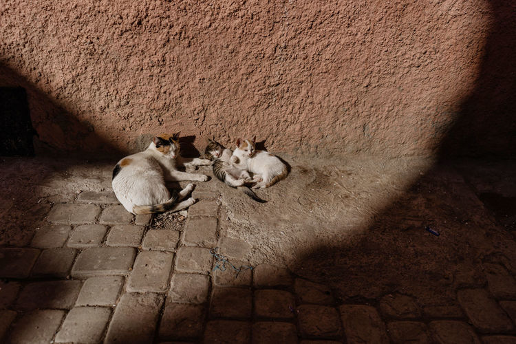 Marrakech Marrakesh Morocco Travel Destinations Tourist Attraction  Mammal Domestic Domestic Animals Group Of Animals Young Animal Animal Family Feline Day Wall - Building Feature Two Animals No People Cat Domestic Cat High Angle View Relaxation Pets Animal Themes