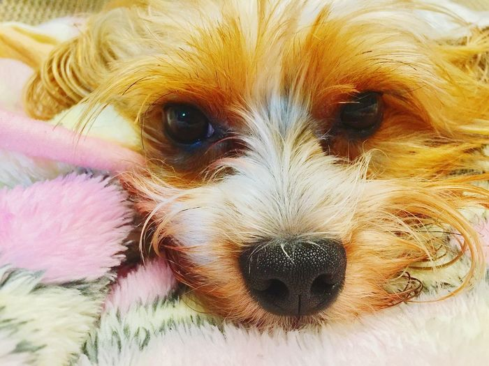 Domestic Animals Pets Animal Themes One Animal Puppies😍 Puppylove 😘😍🐶