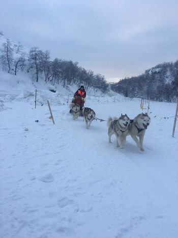 Dogs Of EyeEm Man Streetphotography The Arctic Pole EyeEm Nature Lover Sports Photography The Arctic Pole 300KM -25℃ Boy EyeEm Sunny Day Blue Sky White Color Trees City Love ♥ Give My Heart Dreams Winter Snow Cold Temperature Dog Sled Dog Domestic Animals Animal Travel Winter Sport