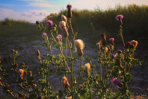 Growth Plant Nature Cactus No People Outdoors Flower Beauty In Nature Day Sky Close-up Beach Photooftheday Coastline Bestoftheday Nature Summer Dunes Beauty In Nature Tranquil Scene