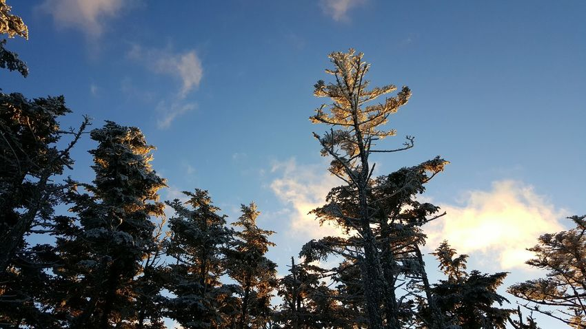Tree Horizontal Nature Sky Sunset Outdoors No People Beauty In Nature Spruce Pine Low Angle Fall Frost Heavy Frost Ice Crystals Ice Seasonal Winter Nature Scenics Clouds Cold Temperature Frigid