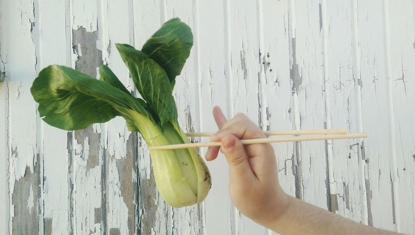 Baby bok choy Human Hand One Person Leaf Human Body Part Vegetable Chopsticks EyeEmNewHere