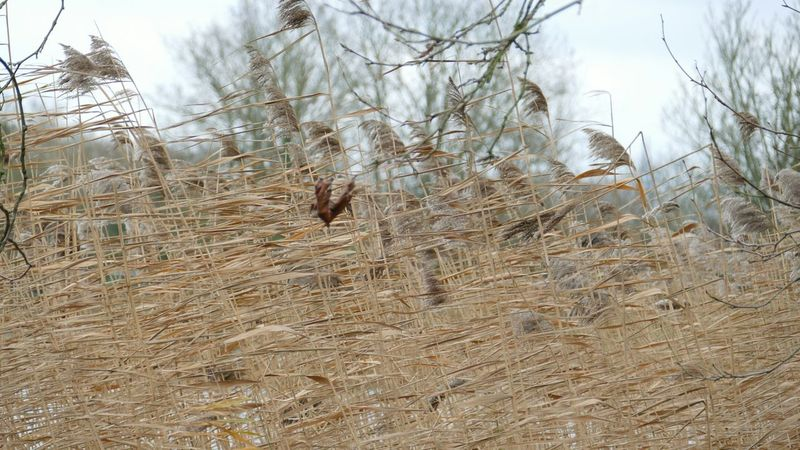 ' Windy ' Outdoors Reeds Tall Grasses Dry Sky Hampstead Heath Field Peace And Quiet Nature -- B