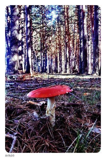 Life in... Escorial Forest Nature Tree Mushroom Happy Road SPAIN Madrid Friends Love Red Gnomo