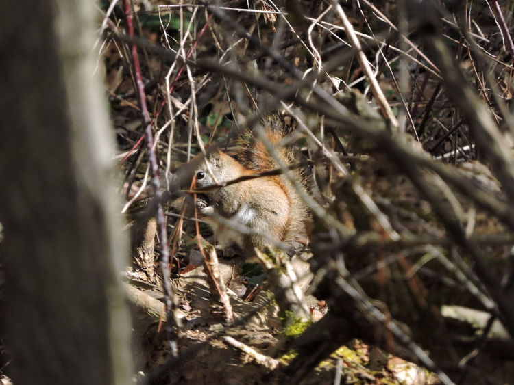 Animal Themes Animal Wildlife Animals In The Wild Bird Branch Close-up Day Food Mammal Nature No People One Animal Outdoors Sparrow Squirrel Eating Sunlit Tree