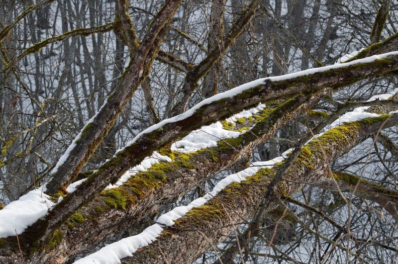 Close-up of frozen tree in forest
