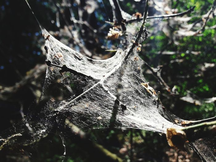 Woven Naturally Woven Spider Web Insect Web Tree Spider Close-up Animal Themes