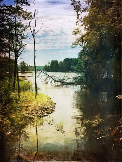 .we wander hand in hand Tree Water Lake Reflection Tranquil Scene Tranquility Nature No People Scenics Beauty In Nature Day Outdoors Sky Landscape Forest Growth Shootermag Shootermag_usa