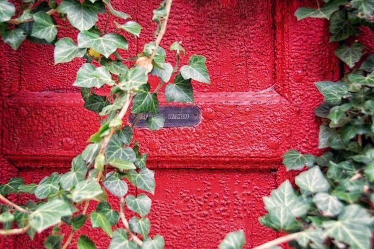 Red Door Ivy
