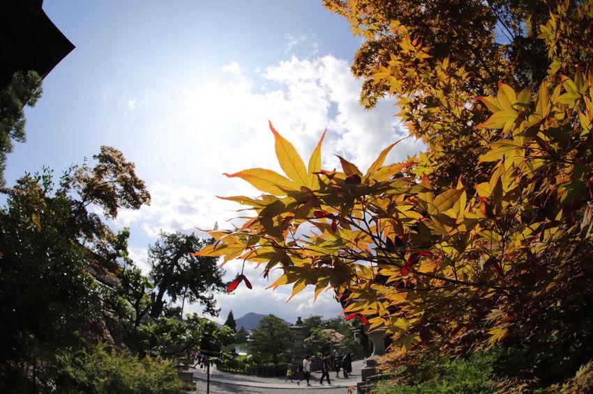 一雨毎に秋が深まる🍁🍁 一目惚れんず 善光寺 (zenko-ji Temple) Tree Nature Sky Sunlight Outdoors Leaf Flower Day Cloud - Sky Growth Beauty In Nature No People Multi Colored City Freshness 深まるのは秋❗春夏冬って・・・❓週末ファイト~👍👍