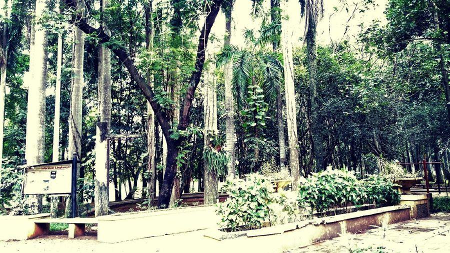 Taman Kota Bsd by P4lsoe