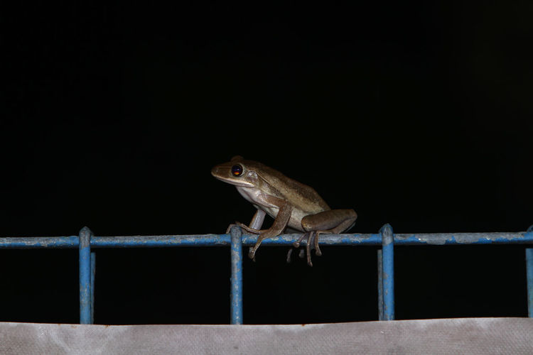 Close-up of lizard on railing