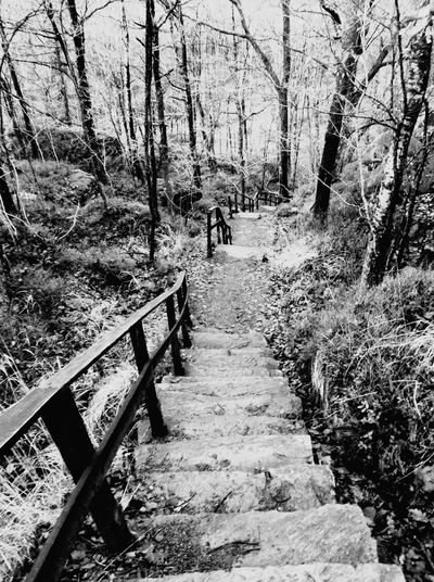 Stairways - if you find stairs in the forest, take them and see where they lead... these are waiting in Delsjön, Gothenburg. Nature On Your Doorstep Forest Chosen Paths